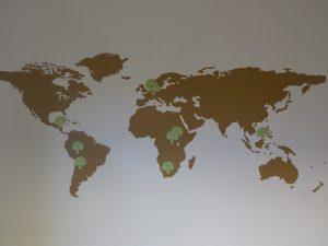 In diesen Ländern pflanzt PrimaKlima bereits Bäume